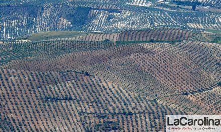 Publicado el primer Informe Anual de Coyuntura del Sector Oleícola, que aborda su situación y evolución