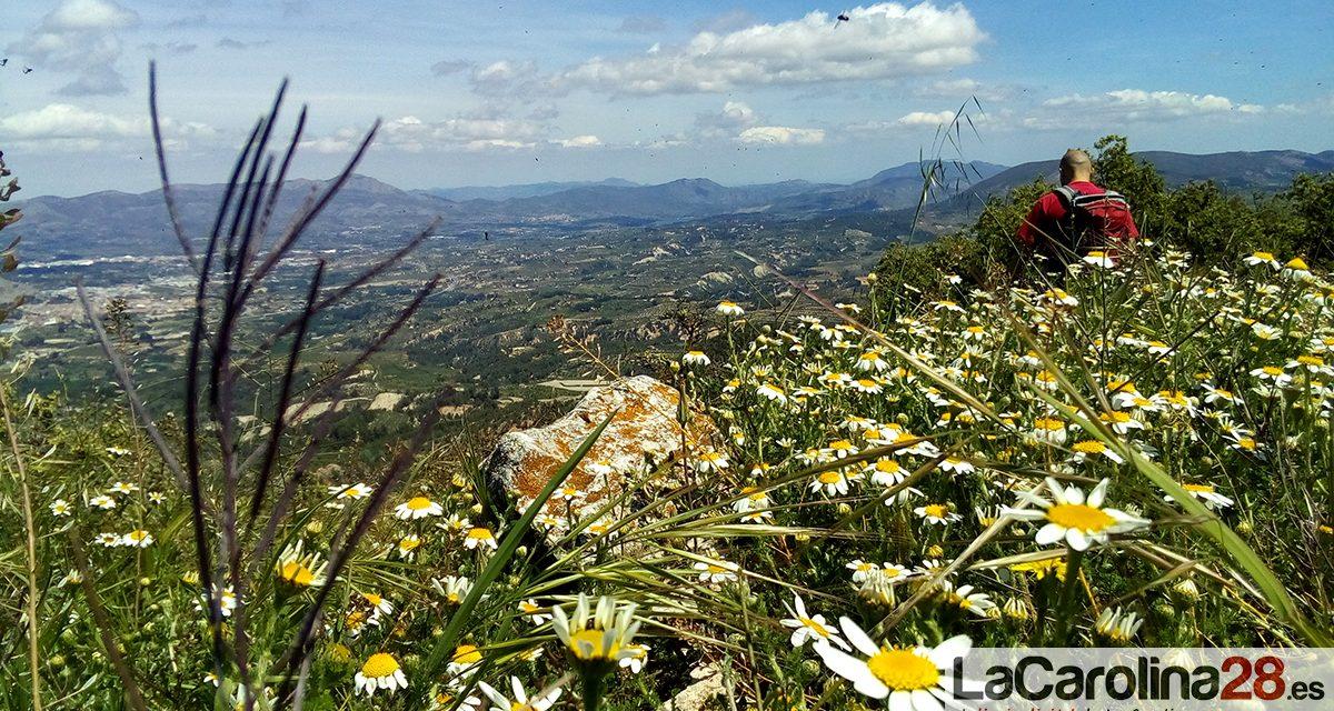 La web del Complejo Hospitalario de Jaén reanudó ayer su información sobre los niveles de polen durante esta primavera