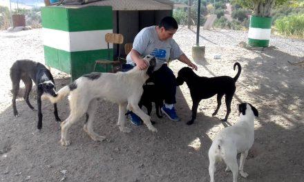 El confinamiento trae un aumento del número de abandonos de perros en La Carolina