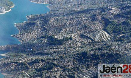 El CES provincial y Fundación Unicaja Jaén buscan la mejor investigación para premiarla con 3.000 euros